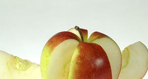 Allrounder Apfel